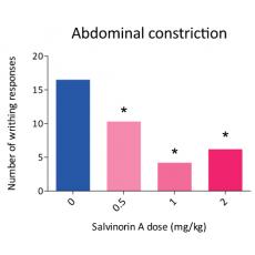 Salvinorin A: a unique painkiller?
