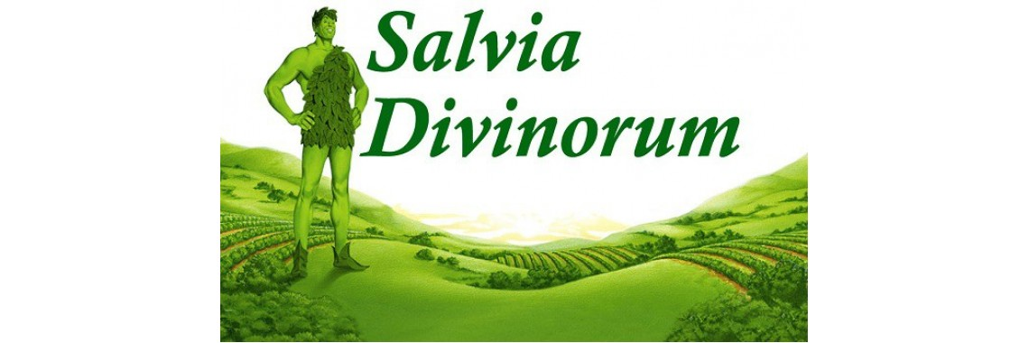 Salvia Divinorum Legal Highs